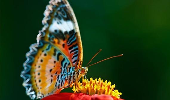کلاس هفته اول خرداد ماه سال ۹۳، درس آشنایی با حشرات و پروانه های ایران