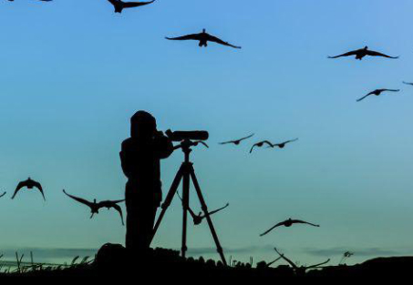 همه چیز در مورد پرنده نگری